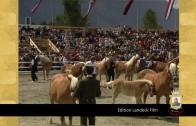 Edition Landeck Film – Haflinger Weltausstellung 1990