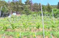 Besuch bei den Telfer Weinbauern