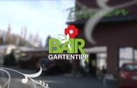 Blumen Bair – Tipp 47-2015