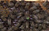 Tiroler Bienenladen in Imst