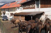 Kindererlebniswochen Telfs – Ausflug zum Ponyhof