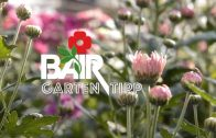 Bairs Gartentipp 36-2016
