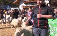 Jubiläumsausstellung – 60. Jahre Schafzuchtverein Telfs