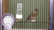 Vogelausstellung Imst