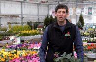 Gartenmagazin – Blumen Bair