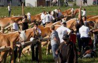 Jubiläumsausstellung – Haflingerzuchtverein Imst