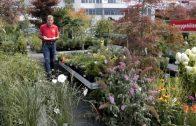 Oppl Gartentipp 33-2018