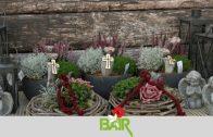 Blumen Bair Spot