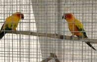 Vogelausstellung Imst 2018
