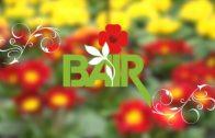 Bairs Gartentipp