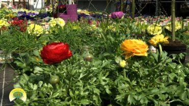 Oppl Gartentipp