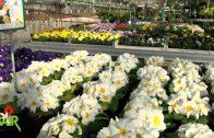Spot Blumen Bair