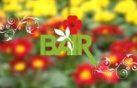Blumen Bair Gartentipp – Muttertag