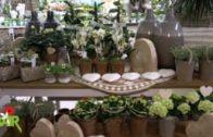 Spot Blumen Bair – Muttertag